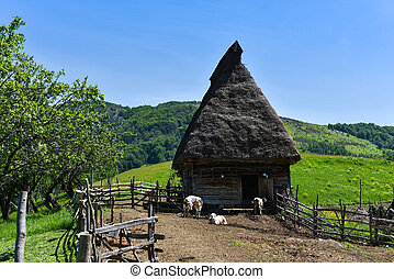 cultures, vache