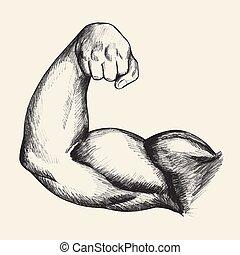 culturista, bíceps
