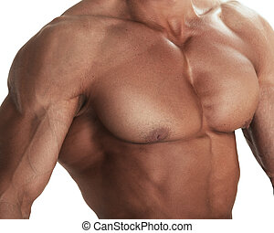 culturiste, torse, musculaire