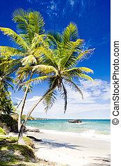 cumana, bahía, trinidad