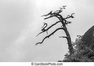 cumbre, árbol, solo, muerto