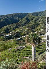 Cumbre Mountains, La Palma, Canary Islands