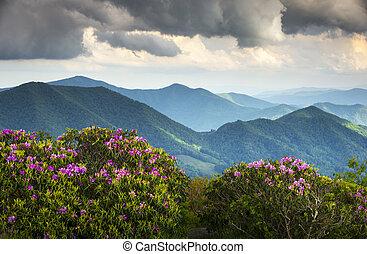 cume azul, appalachian, picos montanha, e, primavera, rhododendron, flores, florescer, ao longo, a, appalachian, rastro, em, ocidental, nc