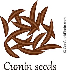 Cumin seeds vector illustration on a white background