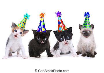 cumpleaños, canción, canto, gatitos, blanco, plano de fondo
