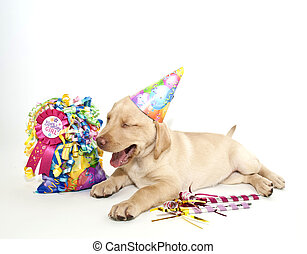 cumpleaños, laboratorio
