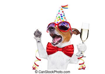cumpleaños, perro, feliz
