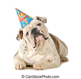 cumpleaños, perro