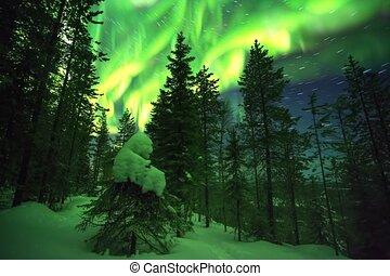 cumulative, étoile, finlandais, nord, étoilé, défaillance, laponie, ciel, lumières, forêt, vert, temps, pistes