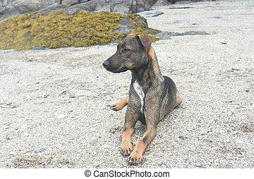 Cunucu pet dog laying down on a beach