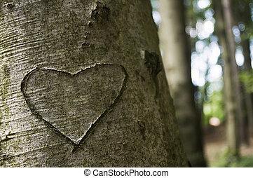 cuore, albero, intagliato