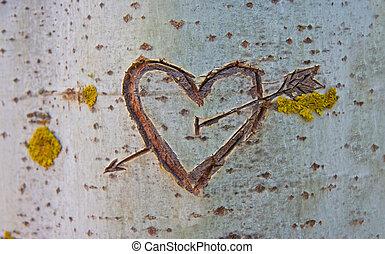 cuore, albero, intagliato, betulla