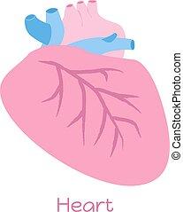 cuore, appartamento, organs., illustrazione, visceri, interno, icona, style.