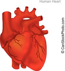 cuore, balloon, illustration., umano, angioplastica