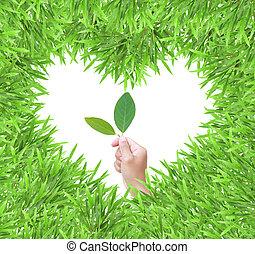 cuore, cornice foto, isolato, mano, erba verde