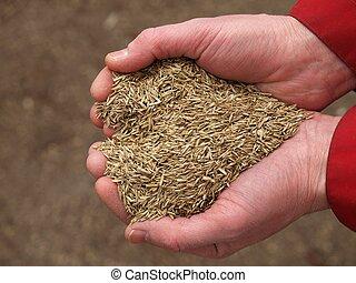 cuore, da, erba, semi, closeup