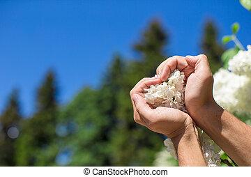 cuore, fiore, forma, forma, closeup, tenere mani, bianco