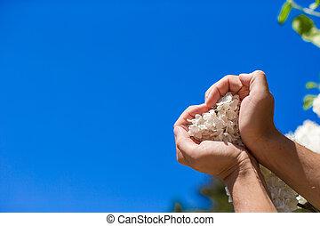 cuore, fiore, forma, forma, closeup, tenere mani, bianco, uomo