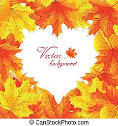 cuore, foglie, forma, acero