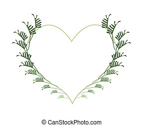 cuore, foglie, fresco, philodendron, forma