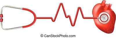 cuore, illustration., realistico, abbatacchiare, isolato, fondo., vettore, stetoscopio, umano, bianco, ekg