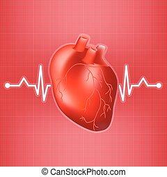 cuore, illustration., realistico, abbatacchiare, isolato, fondo., vettore, umano, ekg