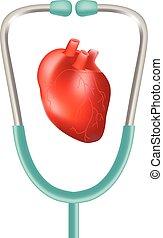 cuore, illustration., realistico, isolato, fondo., vettore, stetoscopio, umano, bianco
