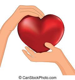 cuore, mano, persona, vettore, presa, rosso