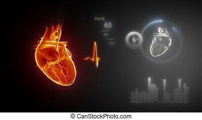 cuore umano, con, traccia impulso