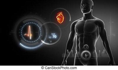 cuore umano, raggi x, scansione