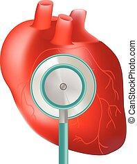 cuore, uso, illustration., realistico, sano, medico, isolato, topic, fondo., vettore, stetoscopio, bianco
