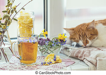 Cup of tea with violet viola, sleeping red-white cat