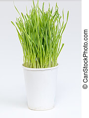 Cup of wheat grass