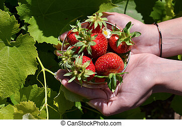 Cup with strawberries in hand sign treats on a green
