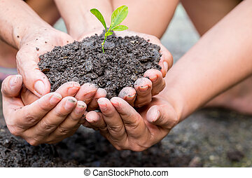 Cupped hands holding a green plant