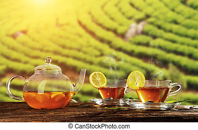 Cups of hot tea with plantation on background