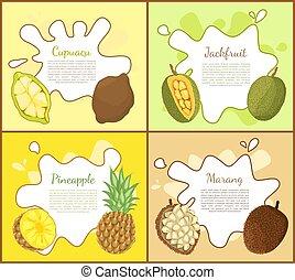 Cupuacu and Jackfruit Posters Vector Illustration - Cupuacu...