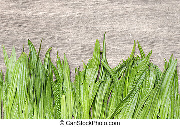 Curative background with a fresh plantain. Place for text
