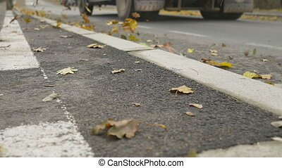 Curb with Autumn Leaves - Low angle view of curb and street...