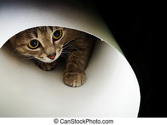 curieux, chat