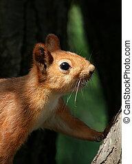 curieux, sur, écureuil, gens