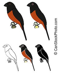 Curio bird in profile view - Vector art.
