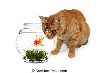 Curiosity Killed the Goldfish - Calico Cat Waiting ot Prance...