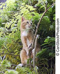 curioso, árvore, vermelho, gato