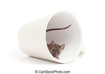 curioso, blanco, ratón, aislado
