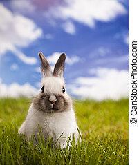 curioso, coniglietto