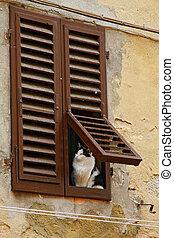 curioso, gatto