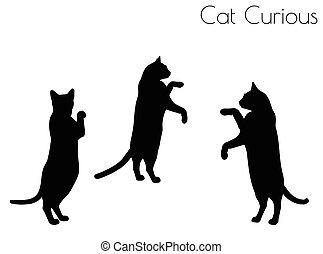 curioso, postura, silueta, gato