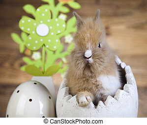 Curious Bunny, springtime colorful bright theme