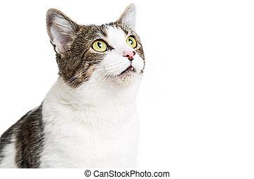Curious Cat Close-up Looking Up